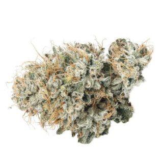Casino Kush Marijuana Strain