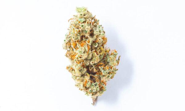 Gelato Dream Cannabis Strain