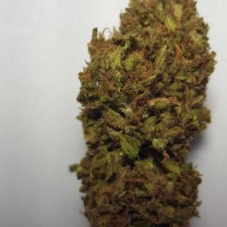Gorilla Dawg Weed Strain