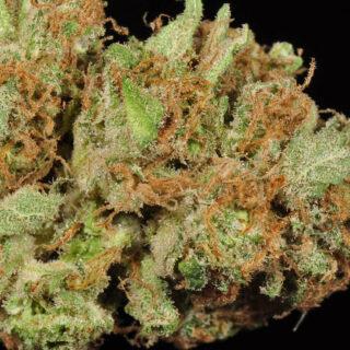 Jabberwocky Marijuana Strain UK