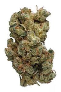 Turbo Diesel Cannabis Strain