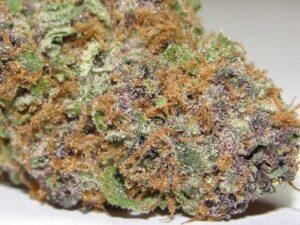 Asteroid Marijuana Strain