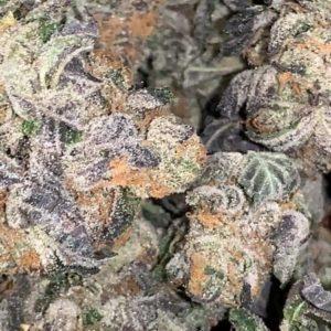 Blue Cookies Weed Strain