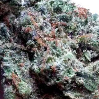 Bubba Fett Marijuana Strain