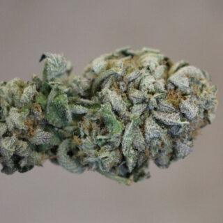 Ice Wreck Marijuana Strain