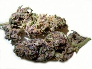 Silvertip Cannabis Strain